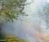 Agricoltore manda in fumo 4 ettari di bosco