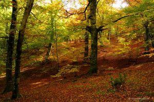 b_300_0_16777215_00_images_lagodivico_faggeta-autunno.jpg