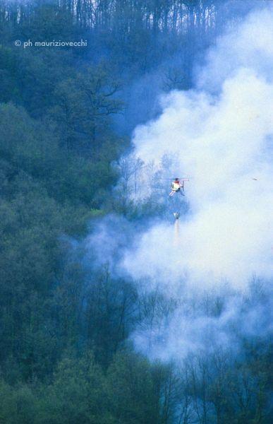 incendio del bosco