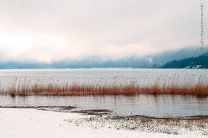 Leggi tutto: Natale nella Riserva Naturale Lago di Vico - 2013